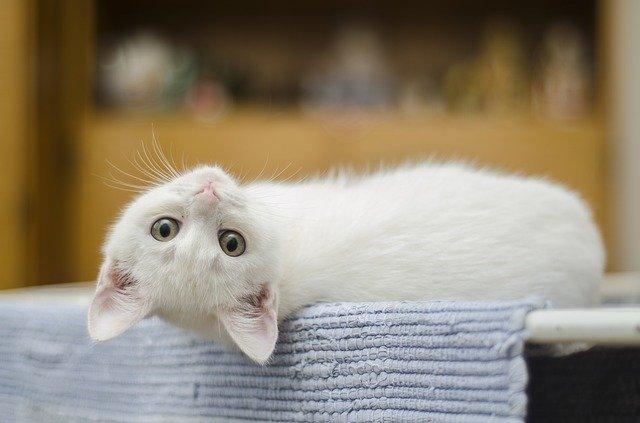 Bulu kucing Penyebab Alergi pada Anak